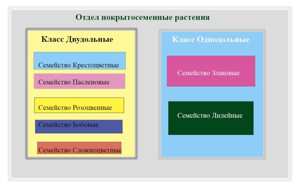 систематика растений