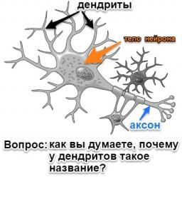 нейрон с вопросом